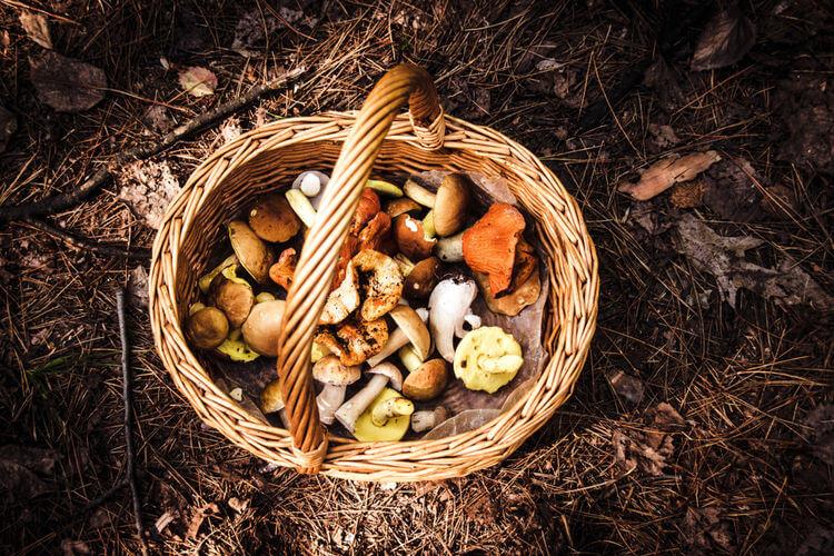 Foraging basket with mushrooms on floor