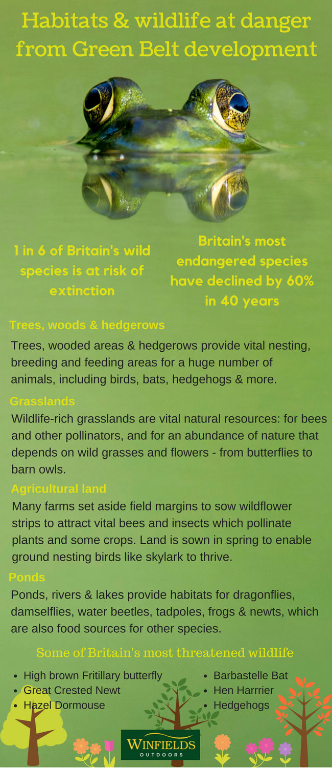 habitats and wildlife at danger from green belt development in the uk