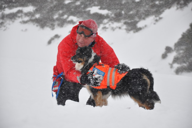 Mountain rescue volunteer and dog