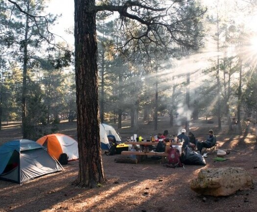 People camping in a forest