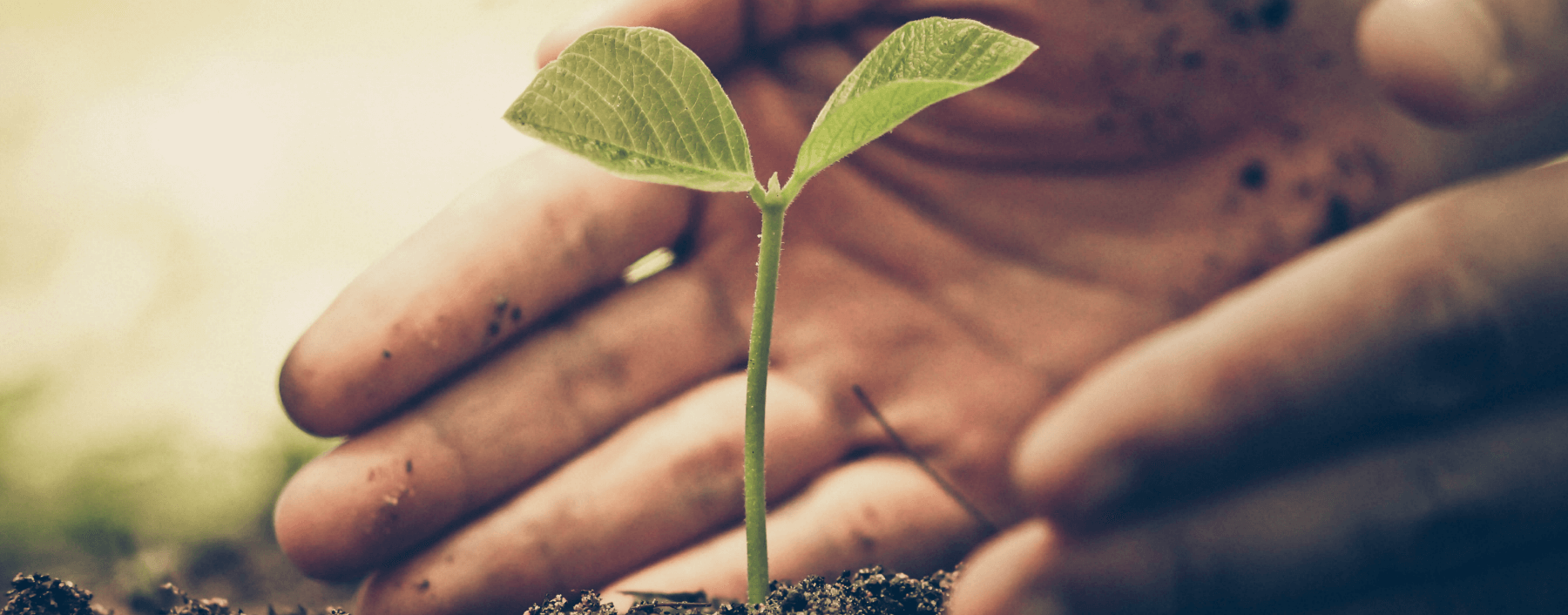 person planting a sapling in soil