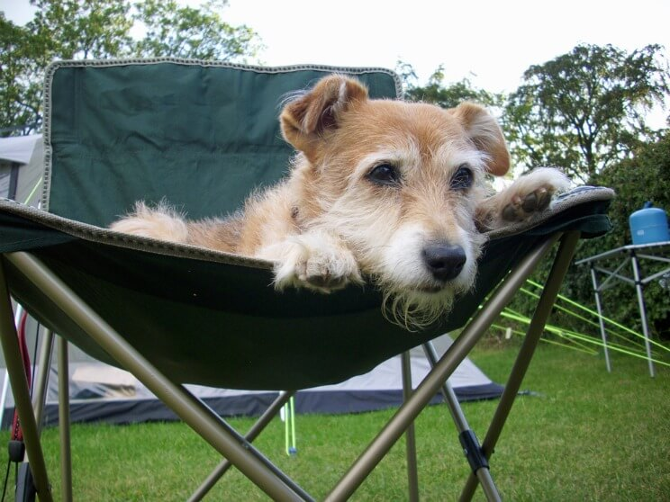 Dog lying on a camping chair